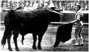 toro-grande