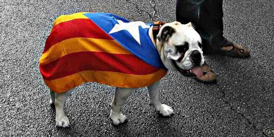 perro-independencia_560x280.jpg