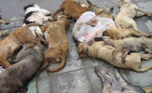 dead-dogs
