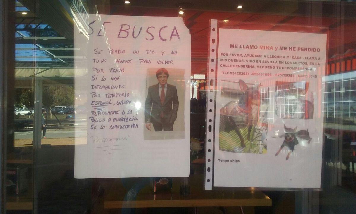 En un bar de Sevilla buscan un perro y otro espécimen