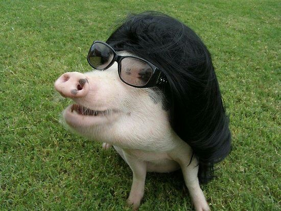pig demont.jpg