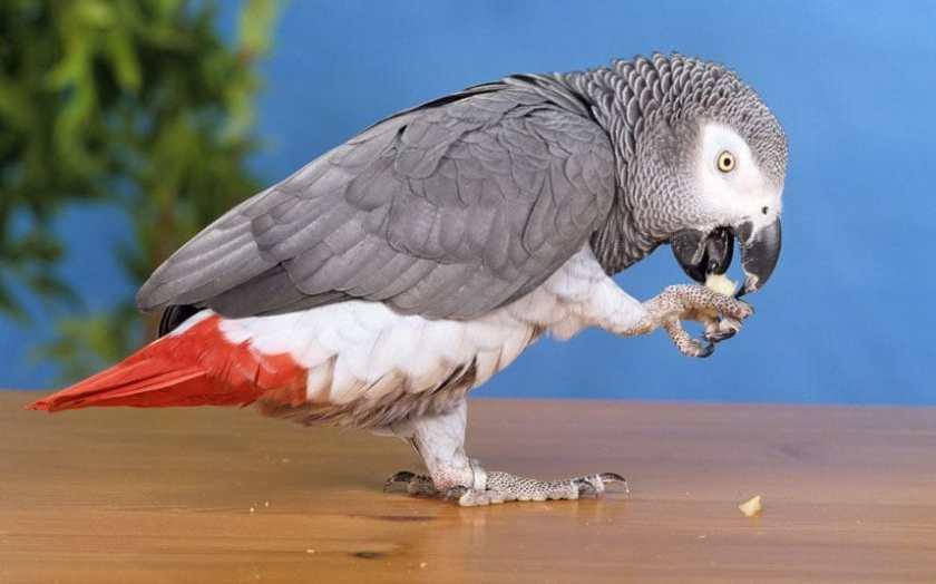 parrot_trans_NvBQzQNjv4BqqVzuuqpFlyLIwiB6NTmJwfSVWeZ_vEN7c6bHu2jJnT8