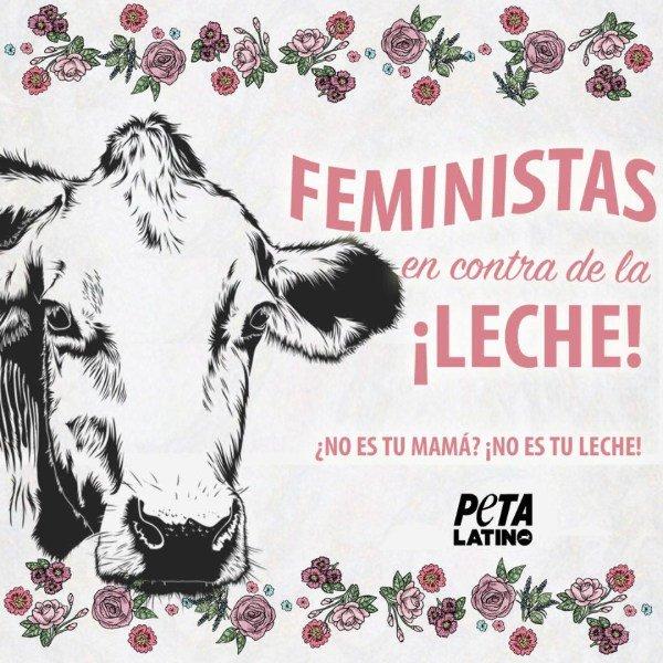 vacas-feministas.jpg