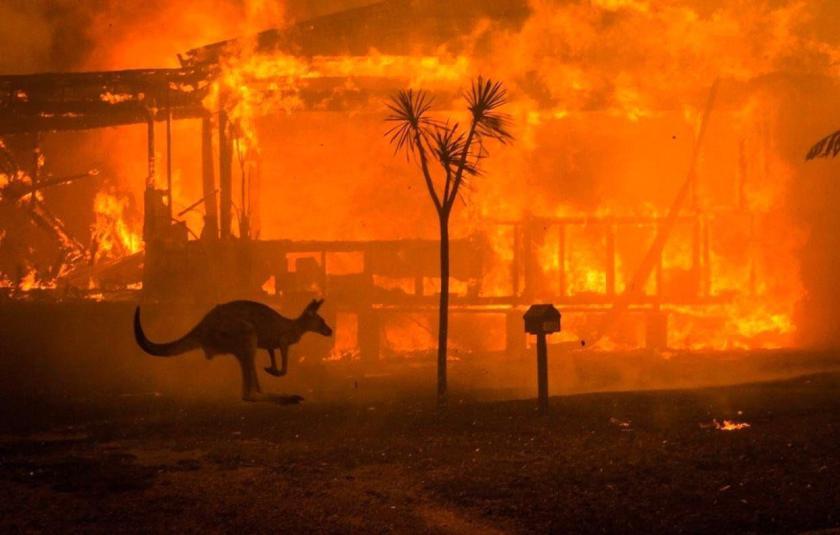 los-incendios-en-australia-han-provocado-la-muerte-de-casi-500-mil-animales-twitter.jpg